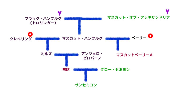 サンセミヨンの系図